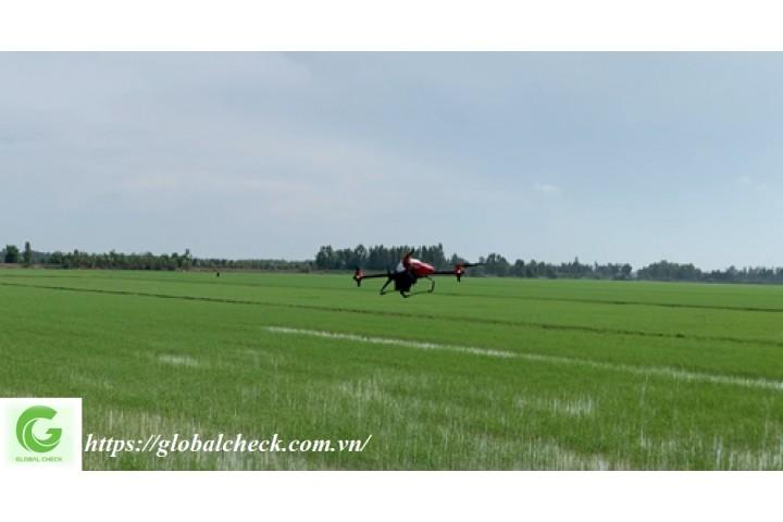 Ứng dụng máy bay nông nghiệp vào sản xuất lúa