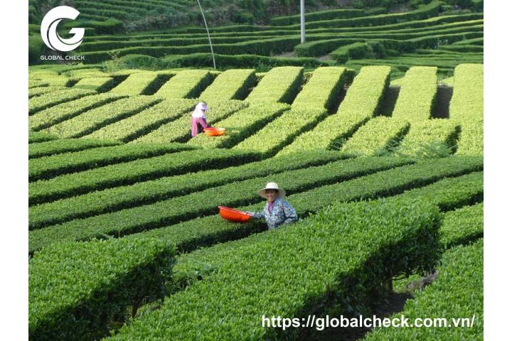 Nông nghiệp Trung Quốc sẽ phát triển bùng nổ như thế nào trong 5-10 năm tới?