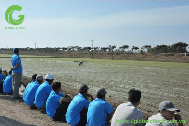 8 phút, drone phun thuốc xong 1ha lúa, giảm công, tăng năng suất