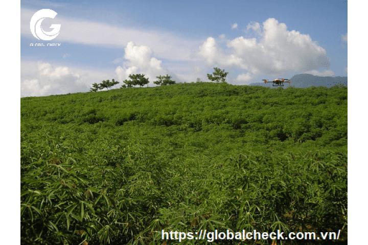 Nông nghiệp Tây Ninh chuyển mình hướng tới sản xuất chất lượng