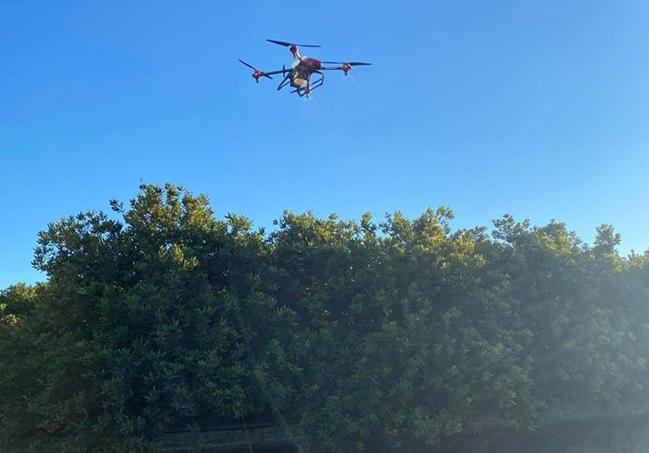 Thử nghiệm phun cây Macadamia để sử dụng làm phân bón và thuốc diệt nấm bằng máy bay