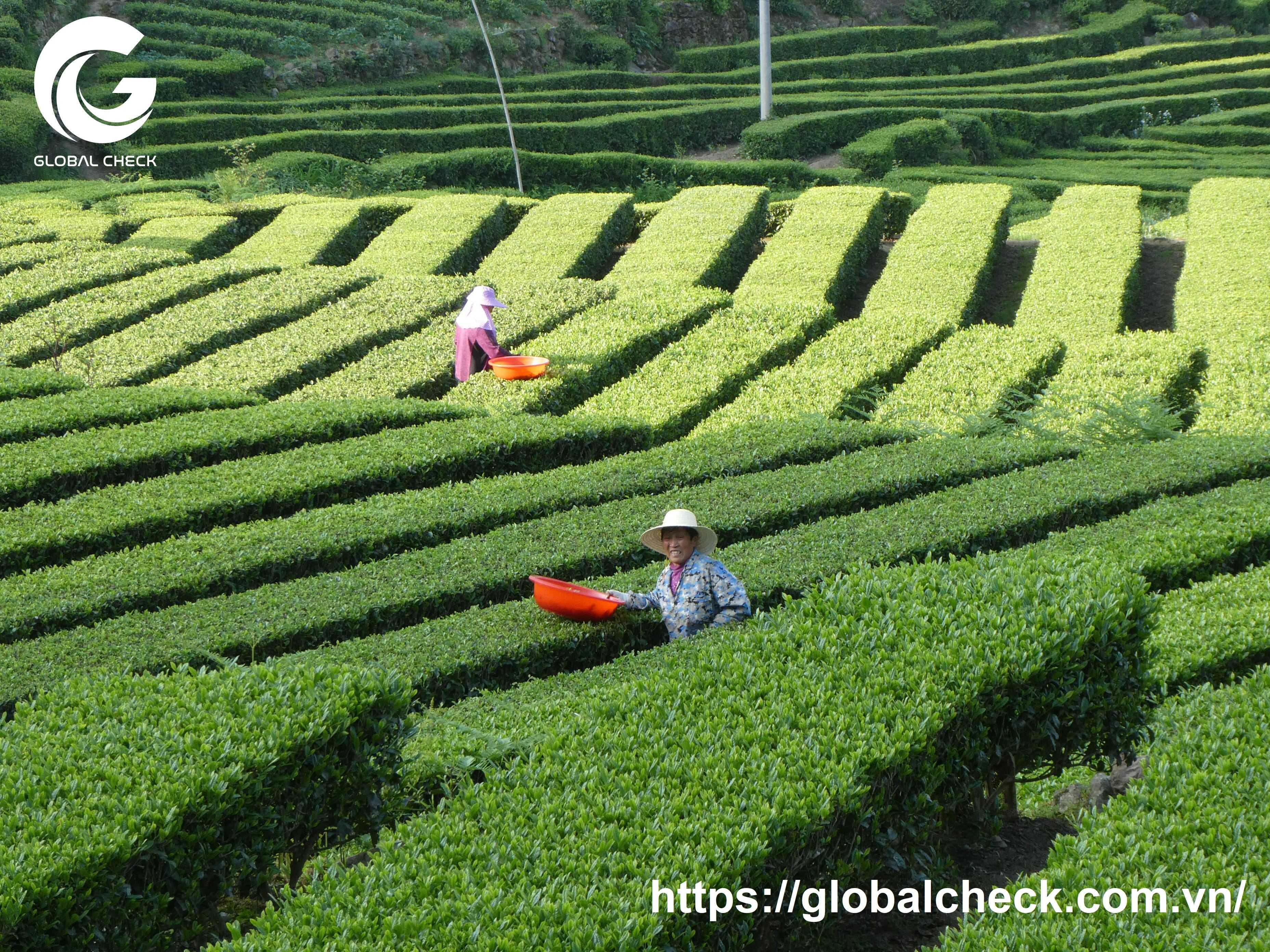nông nghiệp trung quốc