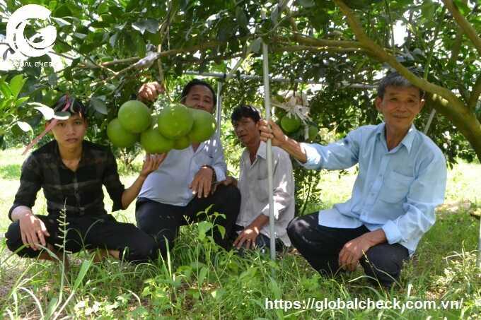 Ứng dụng Robot RG150 trong chăm sóc vườn cây ăn trái ở Bình Dương