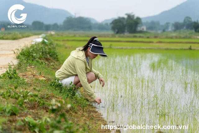 Công nghệ 4.0 thu hút nông dân trẻ làm giàu ở Trung Quốc