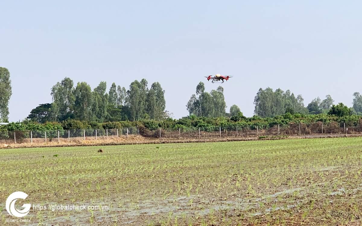 máy bay diệt cỏ globalcheck tại cờ đỏ cần thơ
